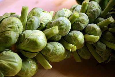 brussels_sprouts_2S.jpg