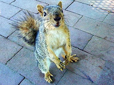 esquilo-freak.jpg