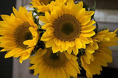 flor-sol_2S.jpg