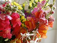 flores_jarro_4S.jpg