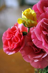 rosas_gabe_3S.jpg