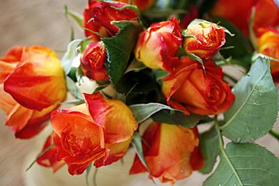 roses_roses_3S.jpg