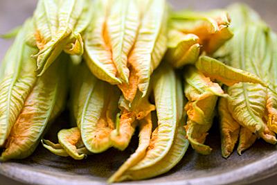 zucchini_blossom_1S.jpg