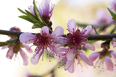 flores-vera_1S.jpg