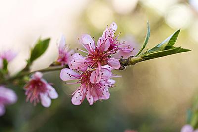 flores-vera_2S.jpg