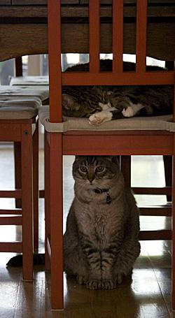 gatos-cadeiras_1S.jpg