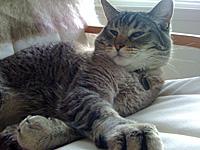 Roux-numa pregui�a danada