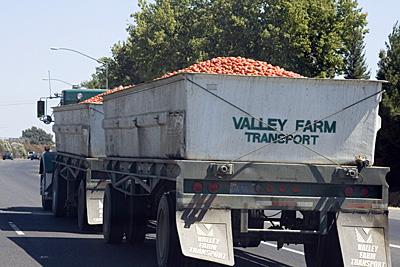 tomato-truck_3S.jpg