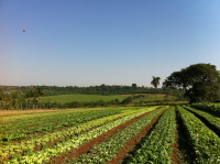 Fazenda Org�nica Yamaguishi