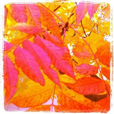 fall11_1S.jpg
