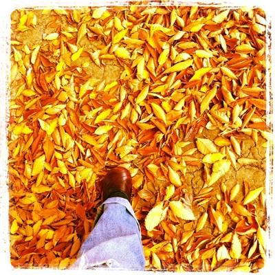 fall11_2S.jpg