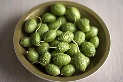 gherkin-cucumber_1S.jpg