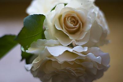 rosas-vintage_2S.jpg