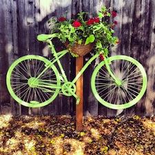 bikes of davis