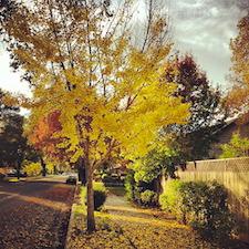 fall-rain