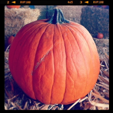pumpkin-time_