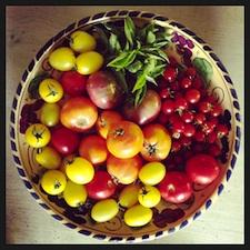 tomatofrenzy1.jpg