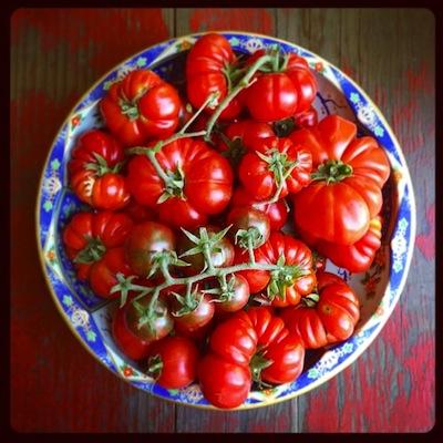 tomatesP1.jpg