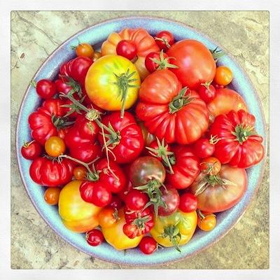 tomatesP2.jpg