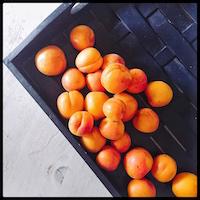 fresh-apricots