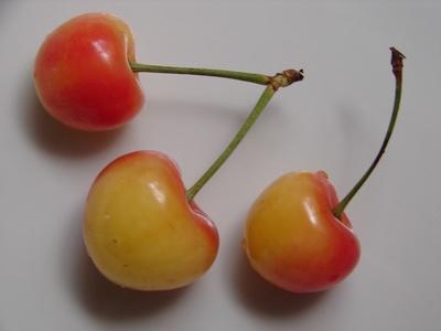 cherryrainier.jpg