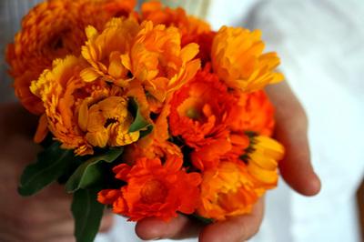flores_que_esqueci_nome1s.jpg