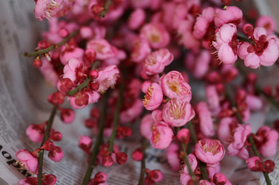 peach_blossoms_1s.jpg