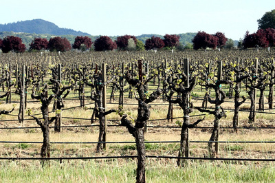russian_river_valley_6a.jpg