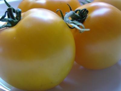 tomatesamaelos.jpg