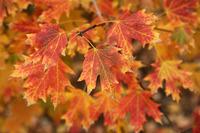 outono08_17S.jpg