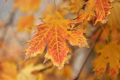 outono08_18S.jpg
